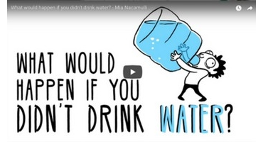 What would happen if you didn't drink water? - Mia Nacamulli